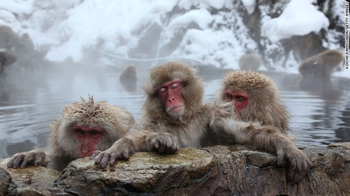 обезьяны климат Китай Mesopithecus pentelicus