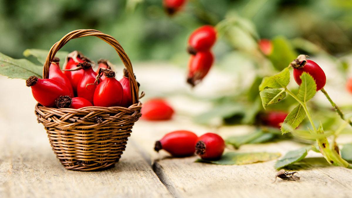 шиповник ягоды плоды