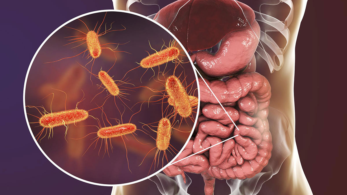 кишечник живот бактерии пищеварение