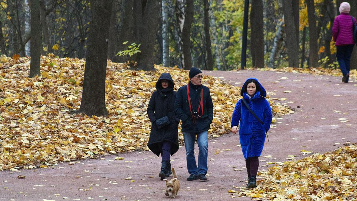 осень парк москва прогулка люди прохожие