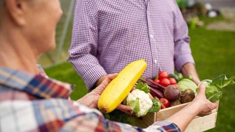 Цветная капуста овощи здоровье cauliflower elderly man
