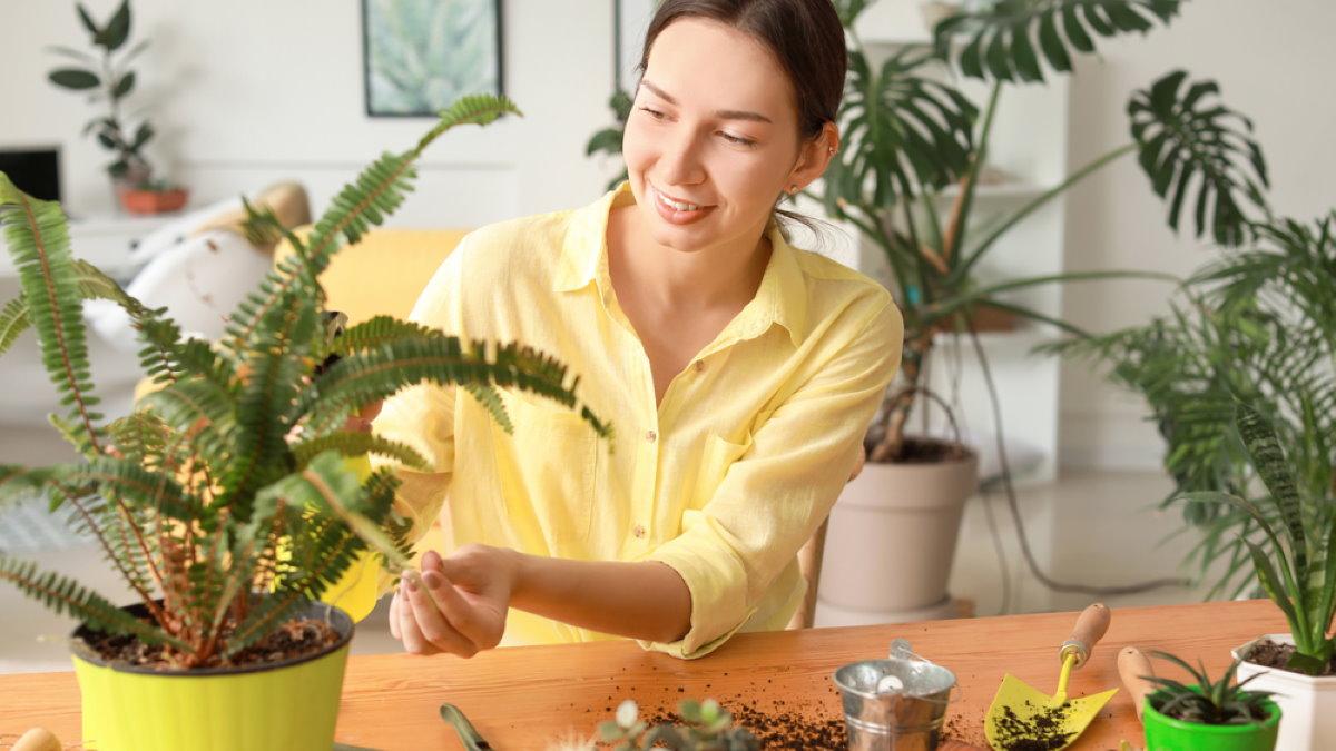 Комнатные растения светлая комната