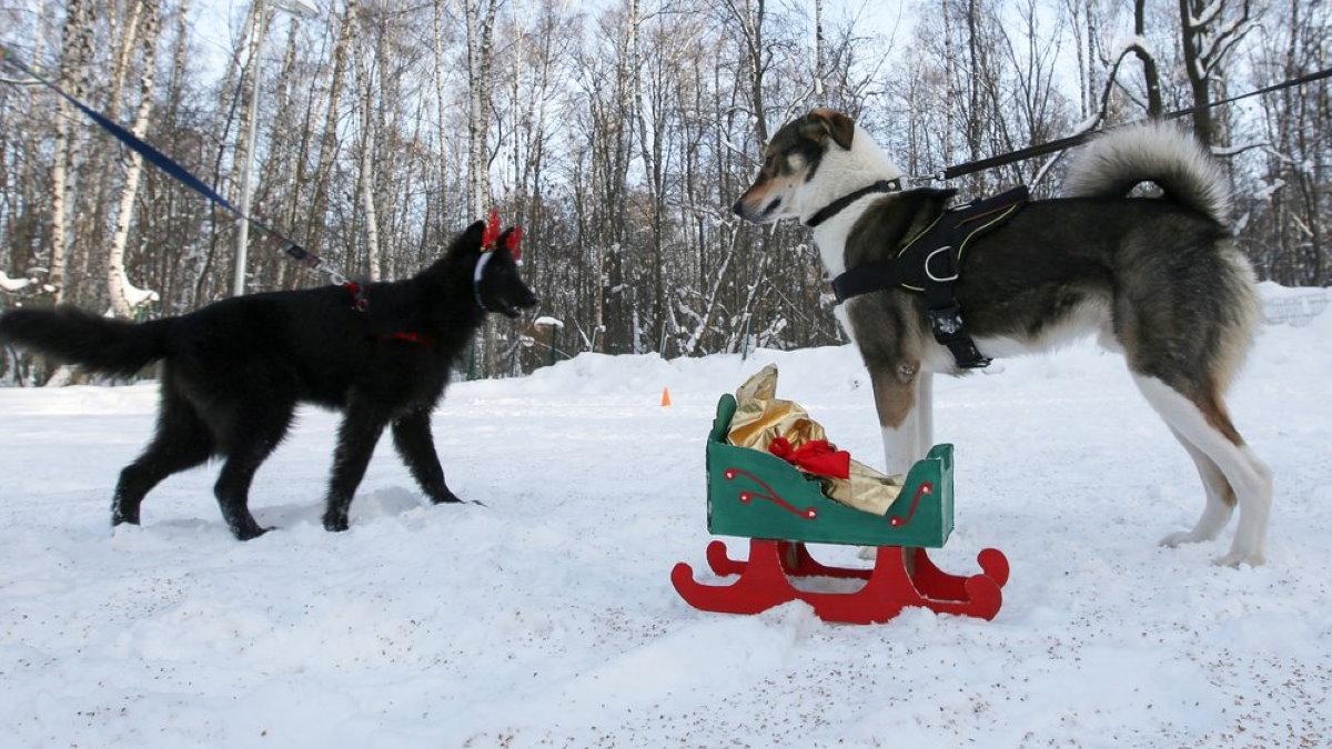 Собаки собака выгул зима