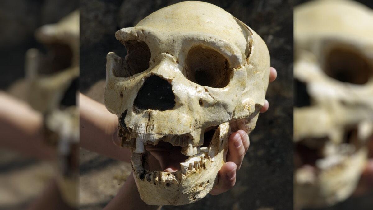 Череп Homo heidelbergensis - человек Гейдельбергский