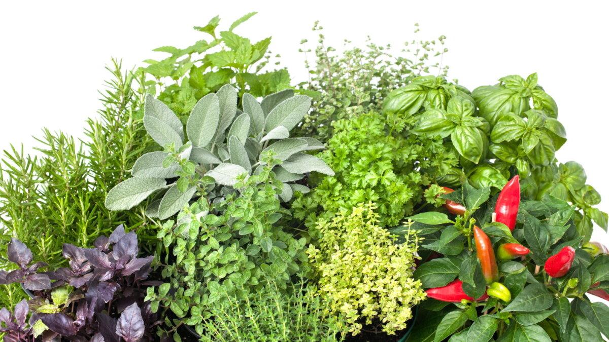 Свежие ароматические травы пряности зелень приправа для кухни