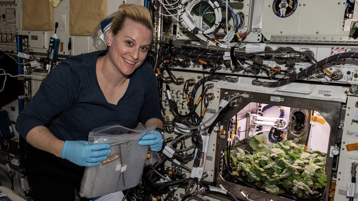 Кейт Рубинс собирала растения редиса, растущие в среде Advanced Plant Habitat