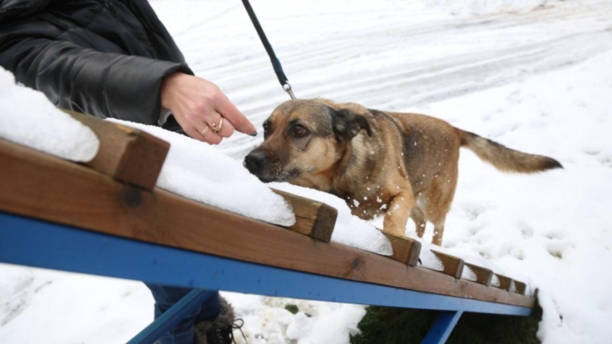 Площадка для выгула и дрессировки собак тренировка три