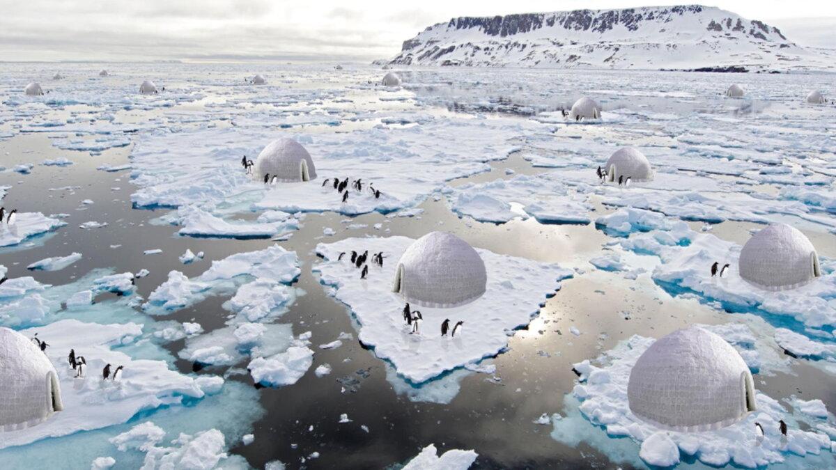 иглу для пингвинов