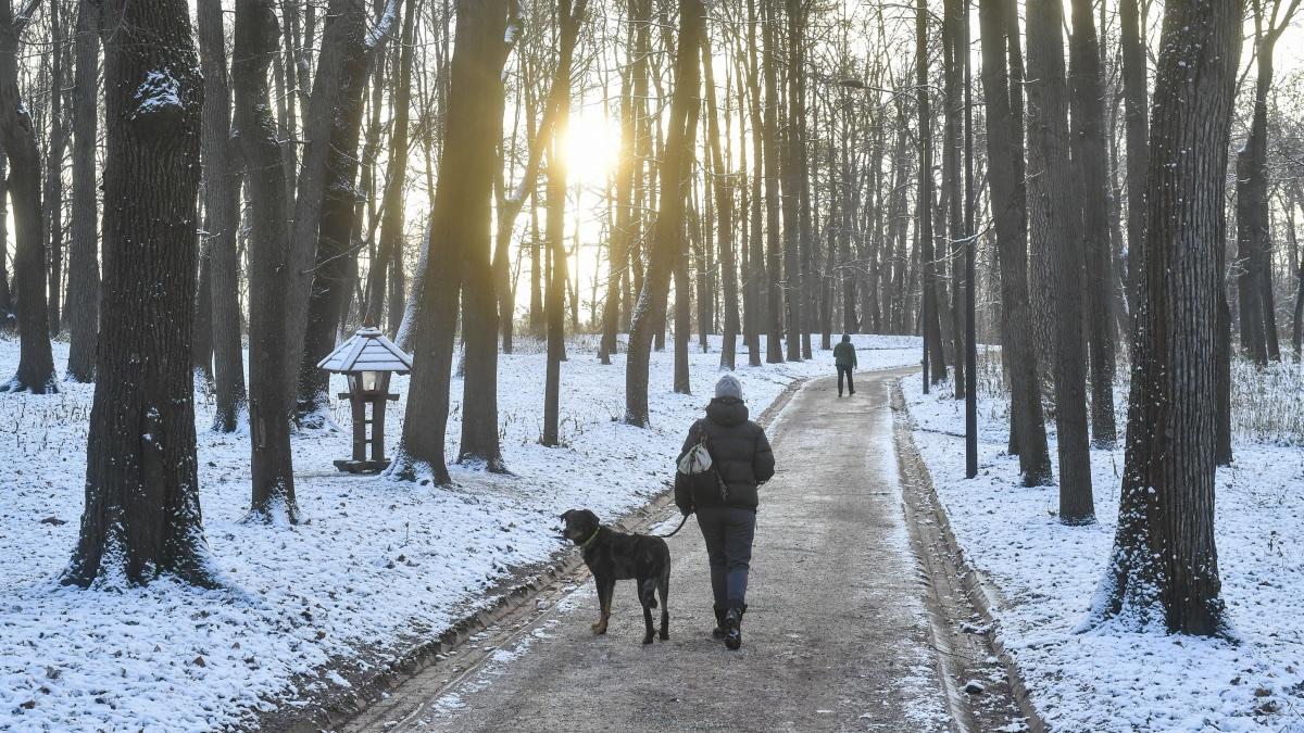 мороз и солнце прогулка в парке