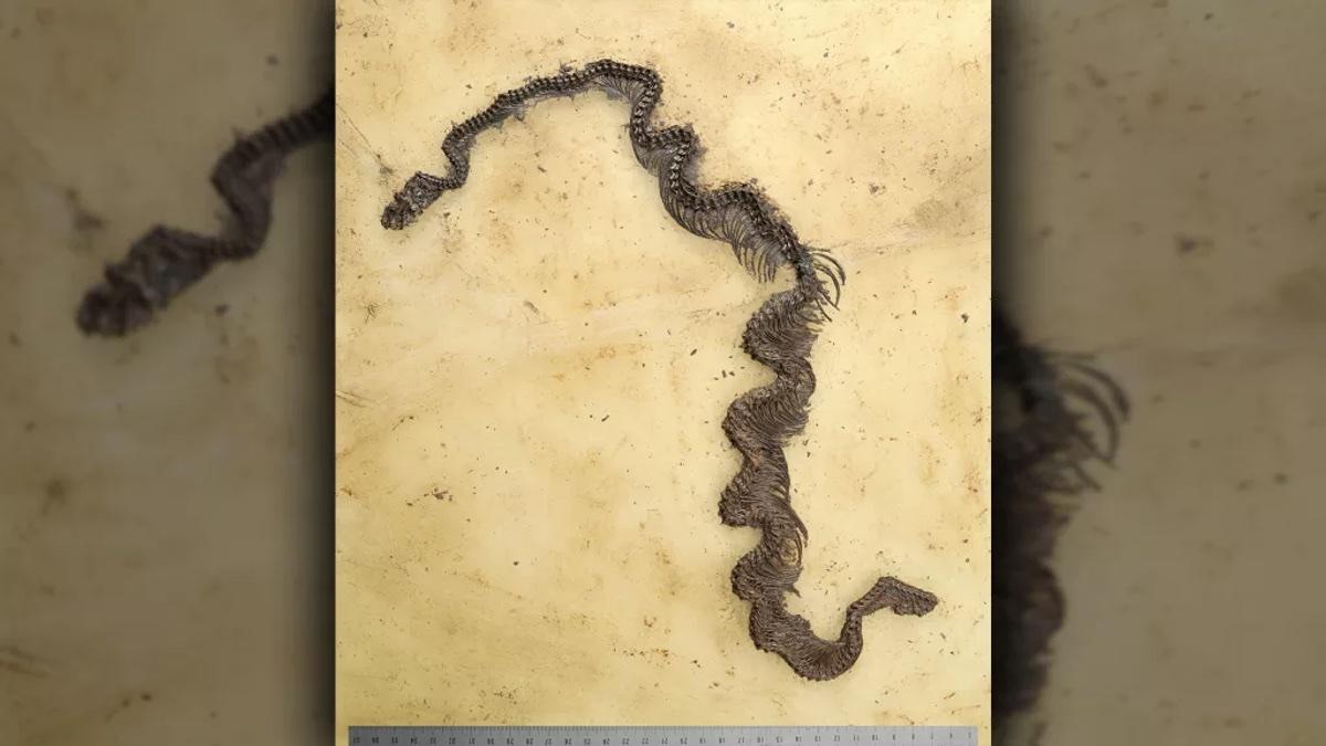 Ископаемый питон возрастом 48 миллионов лет, обнаруженный в Германии