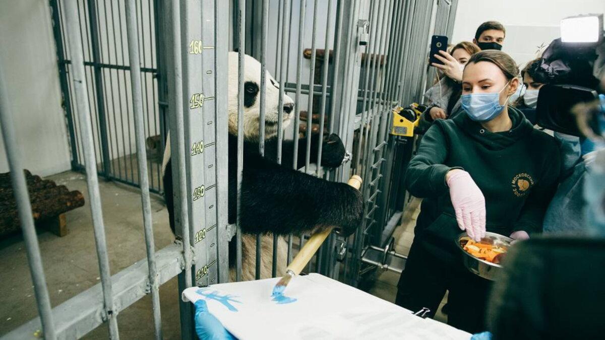 Путин исполнил желание тяжелобольного мальчика панда