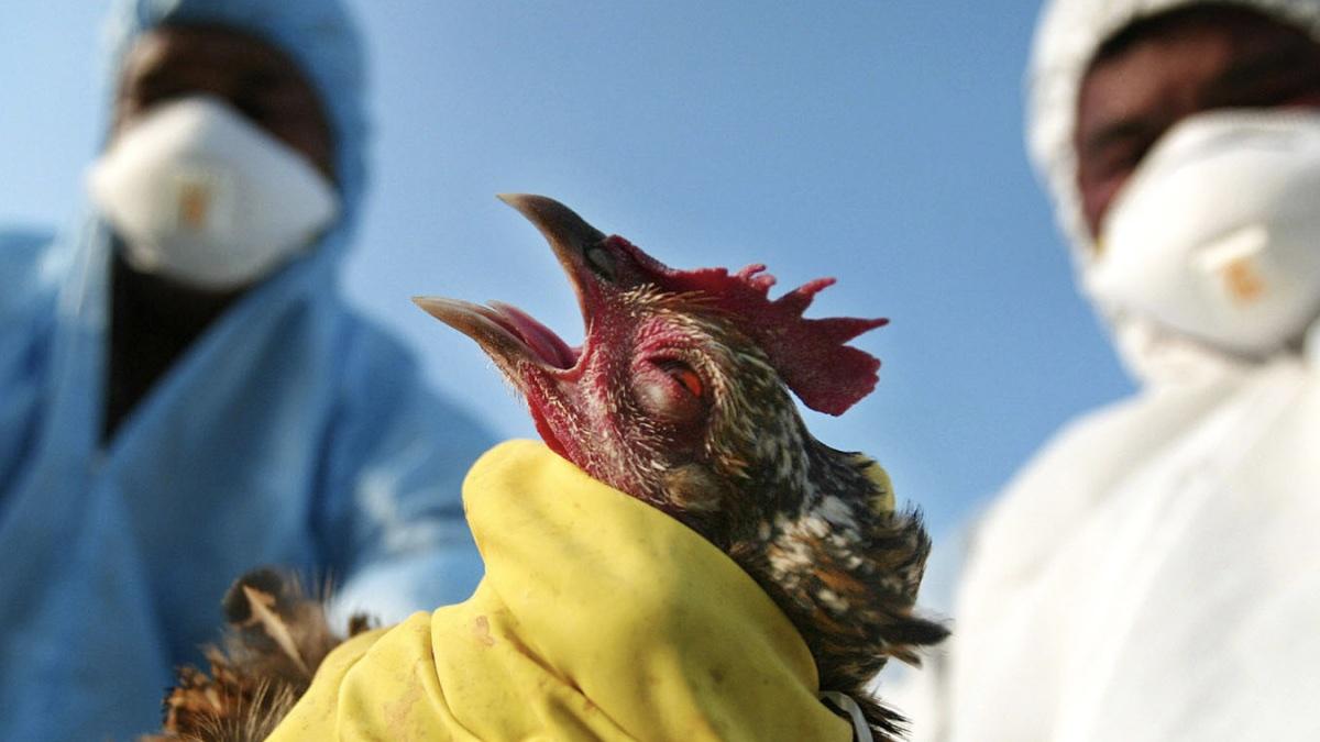 птичий грипп в японии