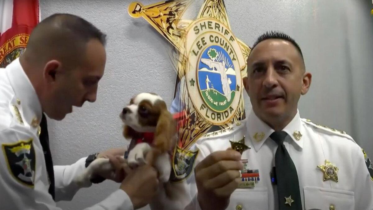 щенок помощник шерифа Флориды