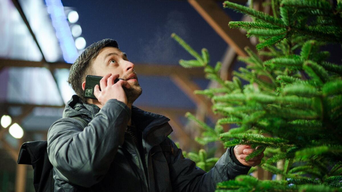 Новый год выбор ёлки ёлочный базар питомник