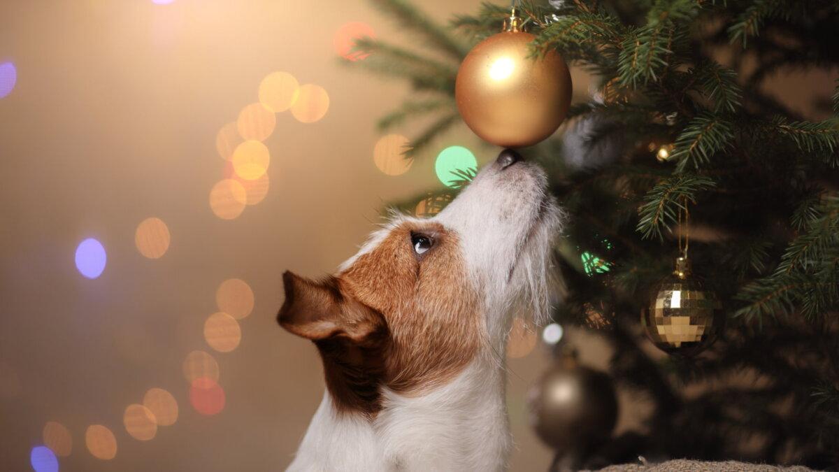 Собака породы джек-рассел-терьер Новый год ёлочная игрушка ёлка