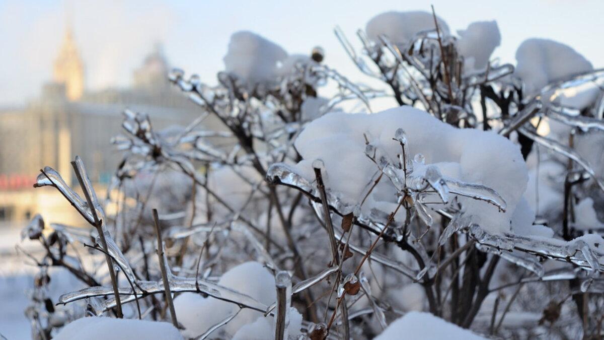 Погода зима ледяной дождь на кустах