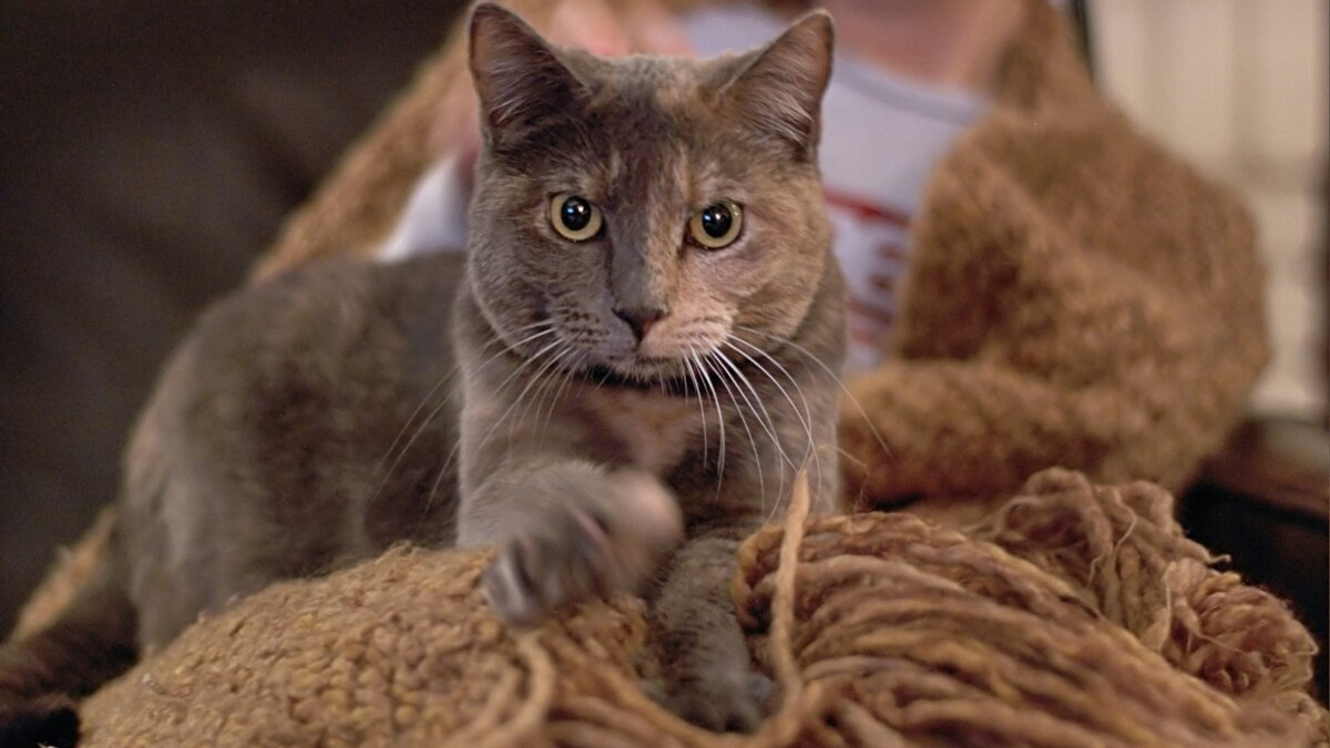 кошка топчется cat kneads