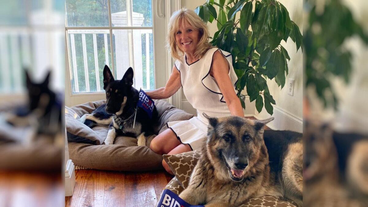 Джилл Байден с собаками Майором и Чемпионом