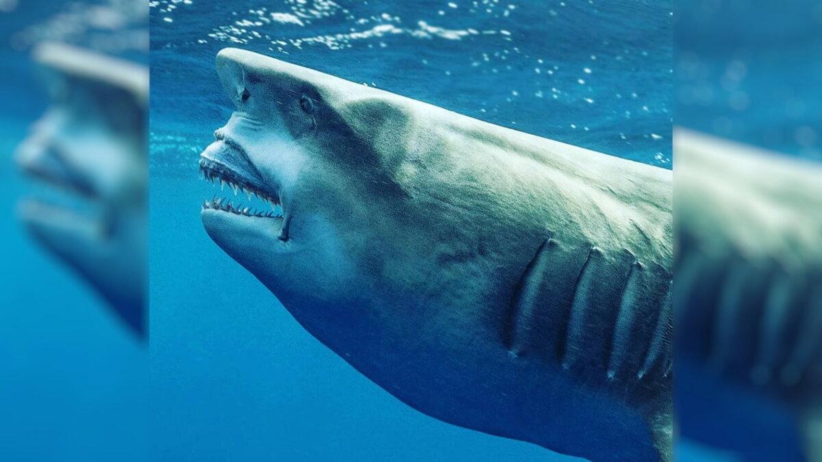 Акула похожая на Трампа