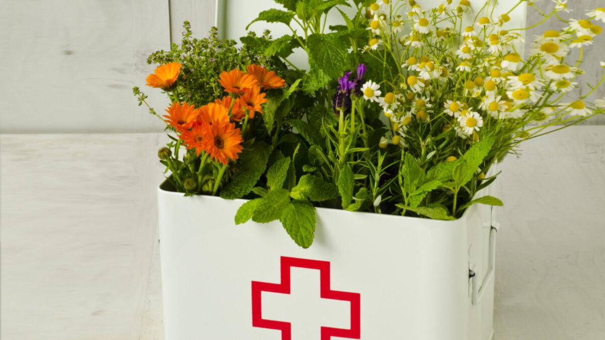 Целебные растения лечебные травы - Розмарин мята ромашка тимьян мелисса лаванда календула