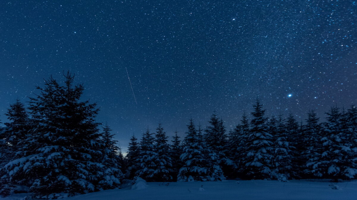 Погода зима ёлки ночь звёздное небо