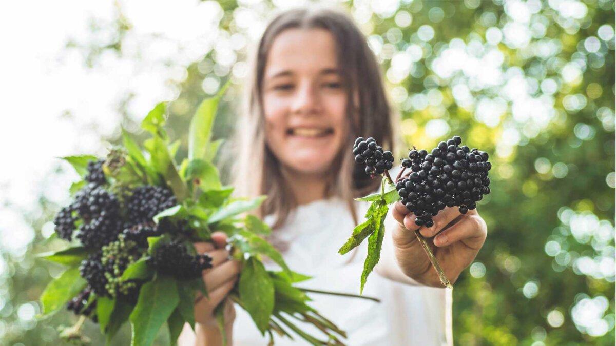 Девушка в саду черная бузина Girl holds in hands clusters fruit black elderberry in garden