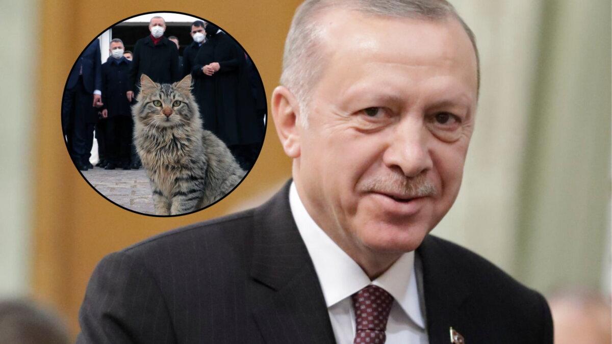 Эрдоган завел Telegram-канал и запостил кота
