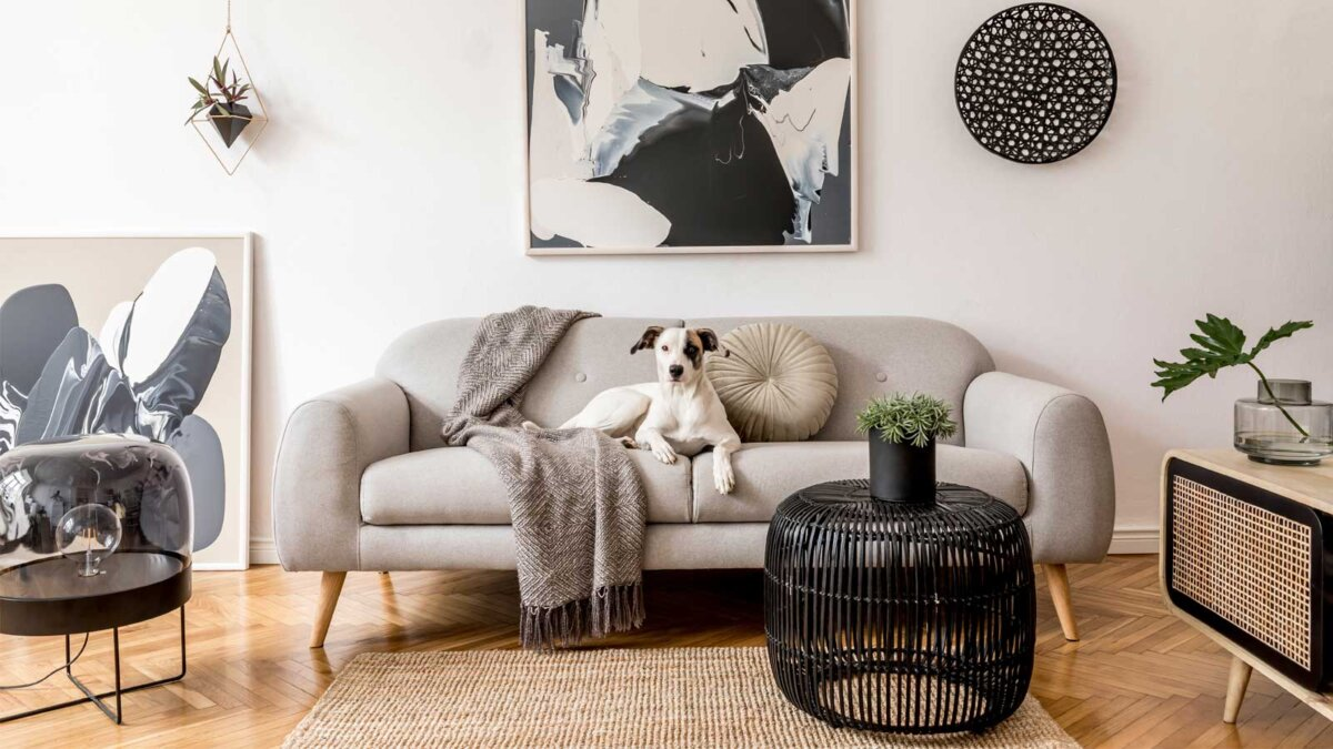 Комната диван стол собака Stylish and scandinavian living room interior