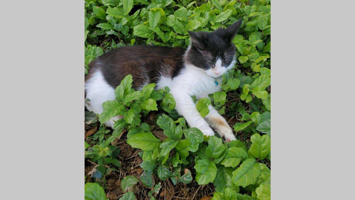 Кошка лежит на лужайке