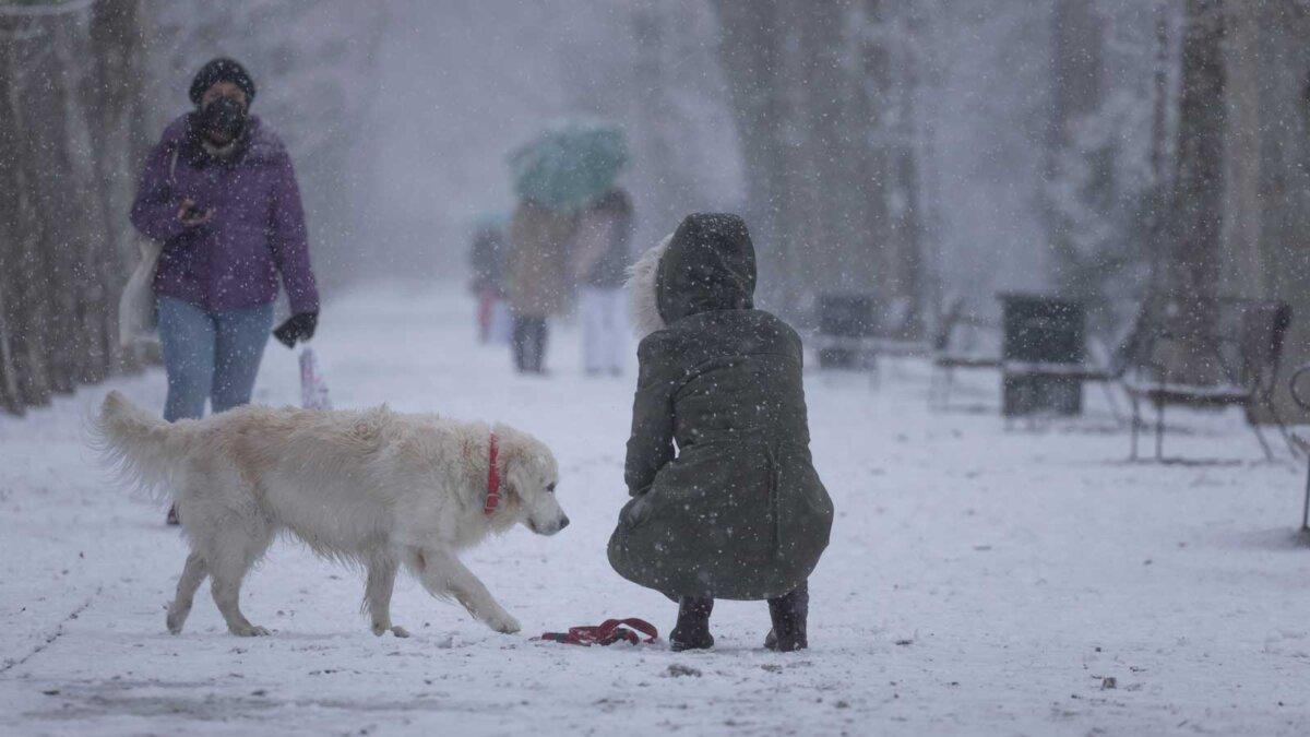Собака парк плохая погода