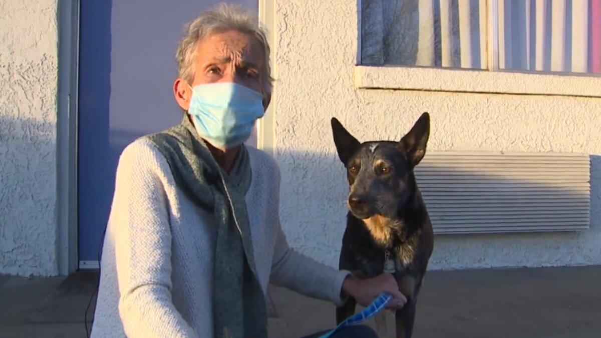 Собака похищенная с машиной вернулась домой