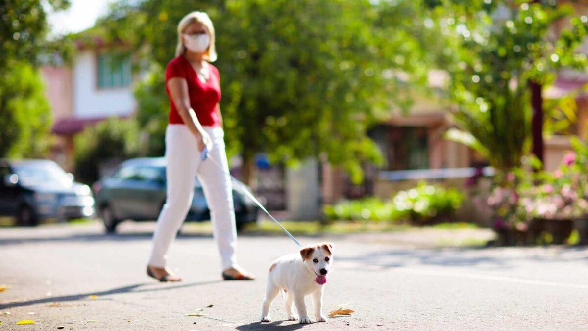 Женщина в маске выгуливает собаку частный сектор