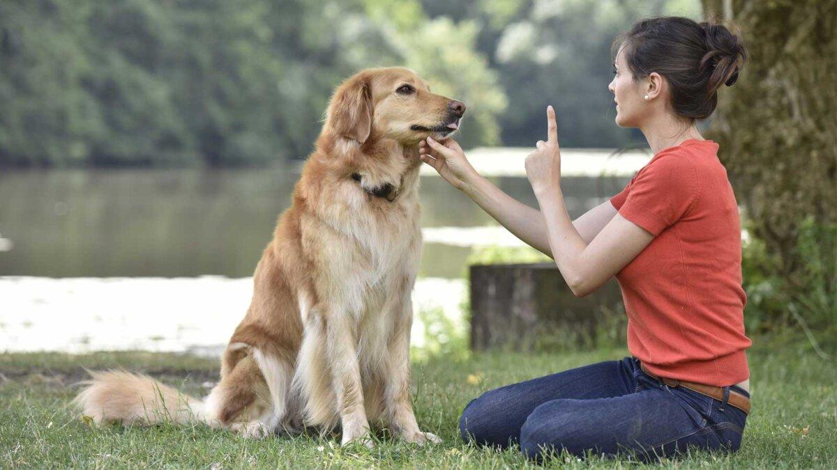 Женщина в парке дрессирует собаку
