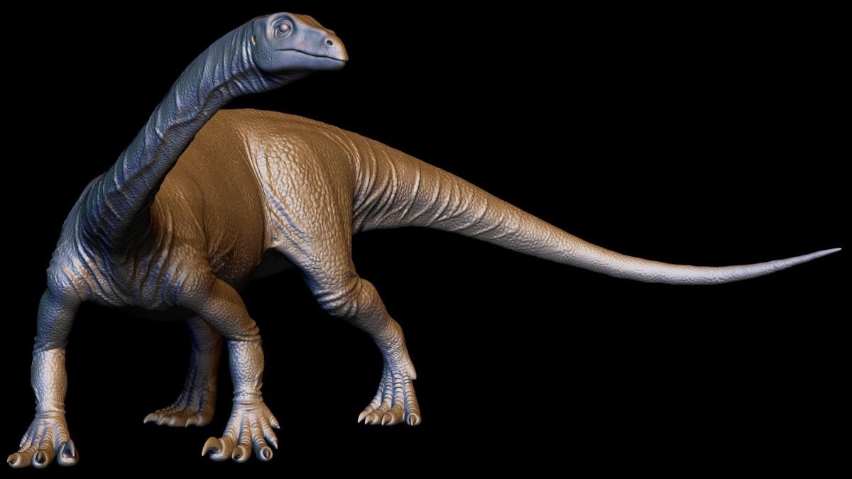 Anchisaurus polyzelus, будущийофициальный динозавр штата Массачусетс