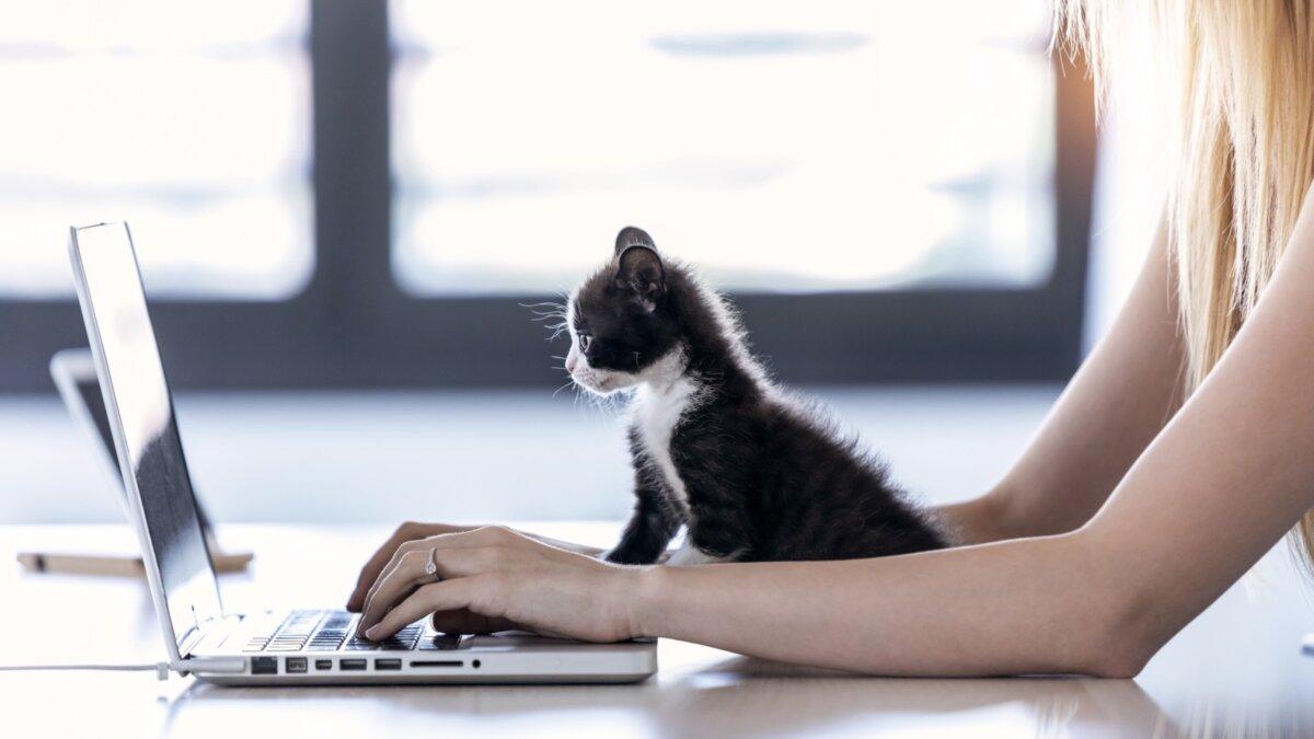 кошка и работа на удаленке