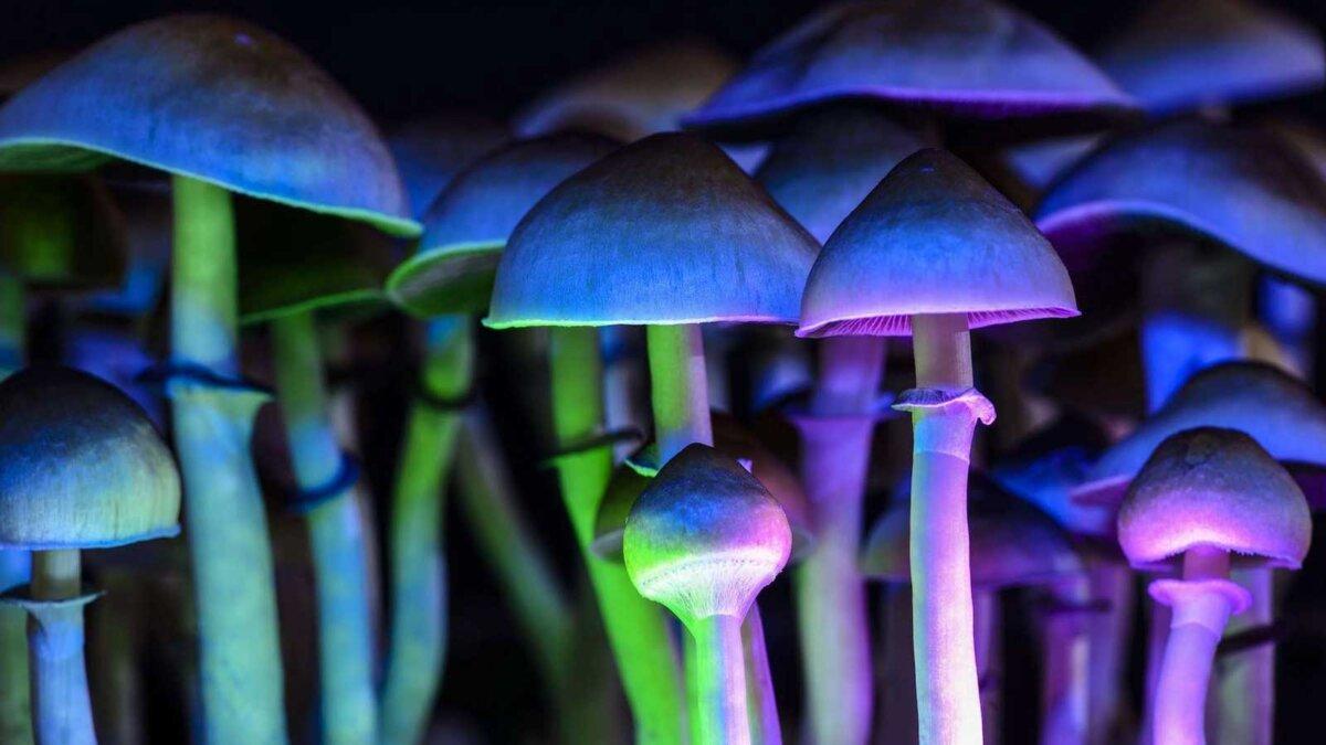psilocybin mushrooms псилоцибиновые грибы