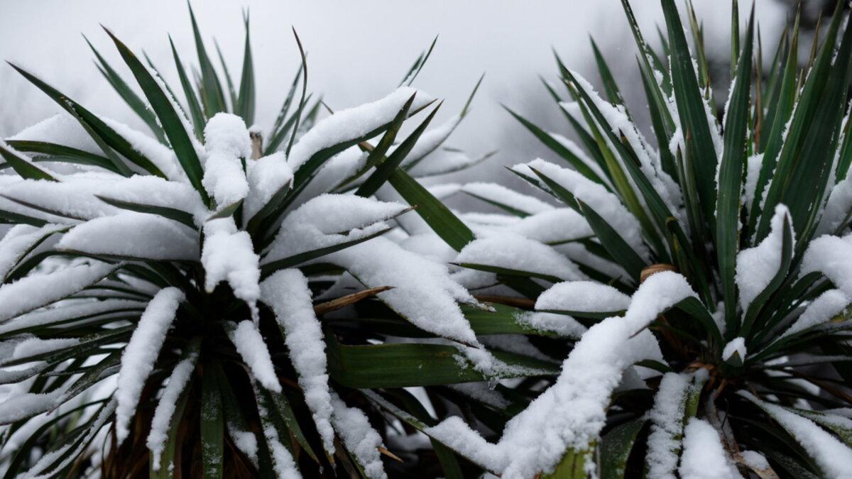 Погода пальмы в снегу тропики