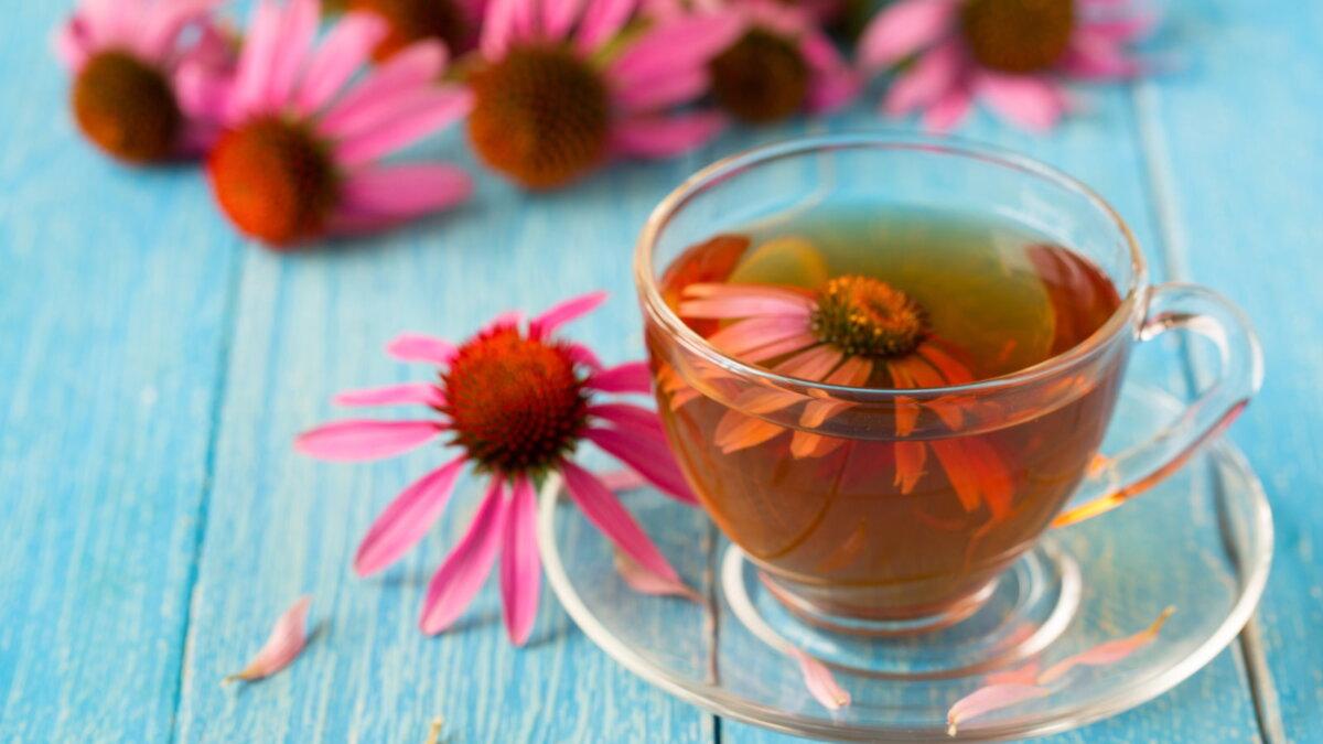 Чайный напиток отвар цветы эхинацея против гриппа три