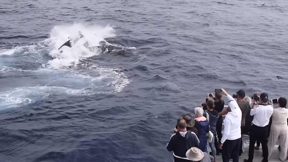 Горбатый кит касатки лодка люди снимают