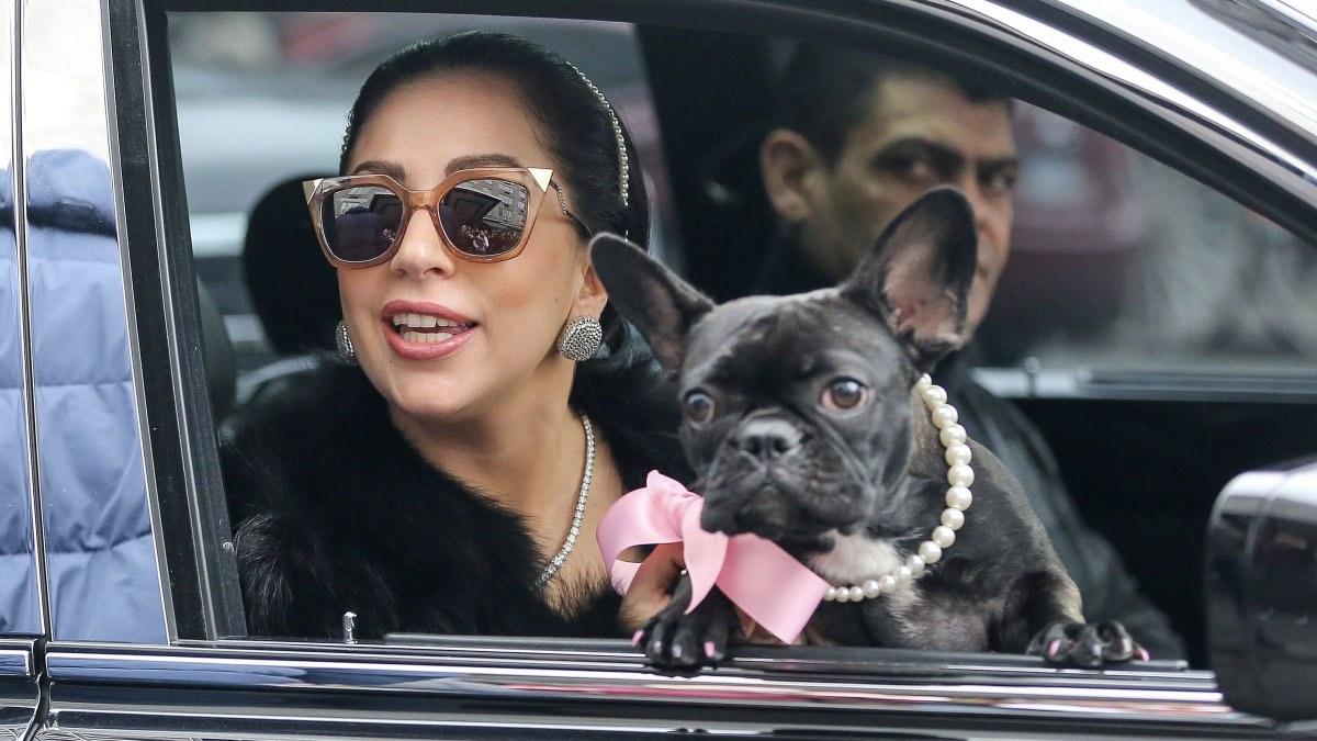 Леди Гага и бульдог