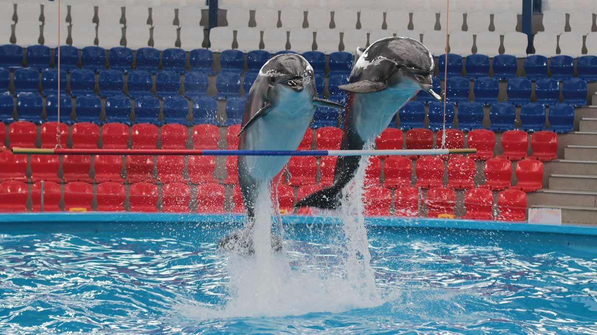 дельфины прыгают океанариум
