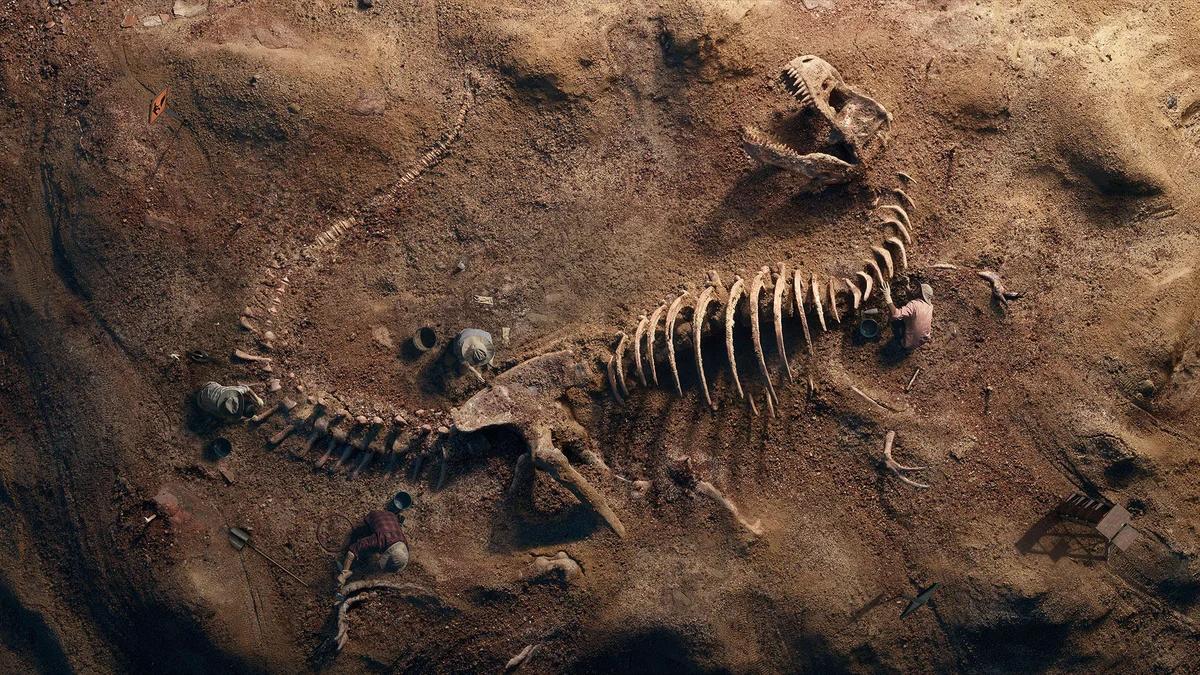 Тираннозавр T-Rex окаменелости