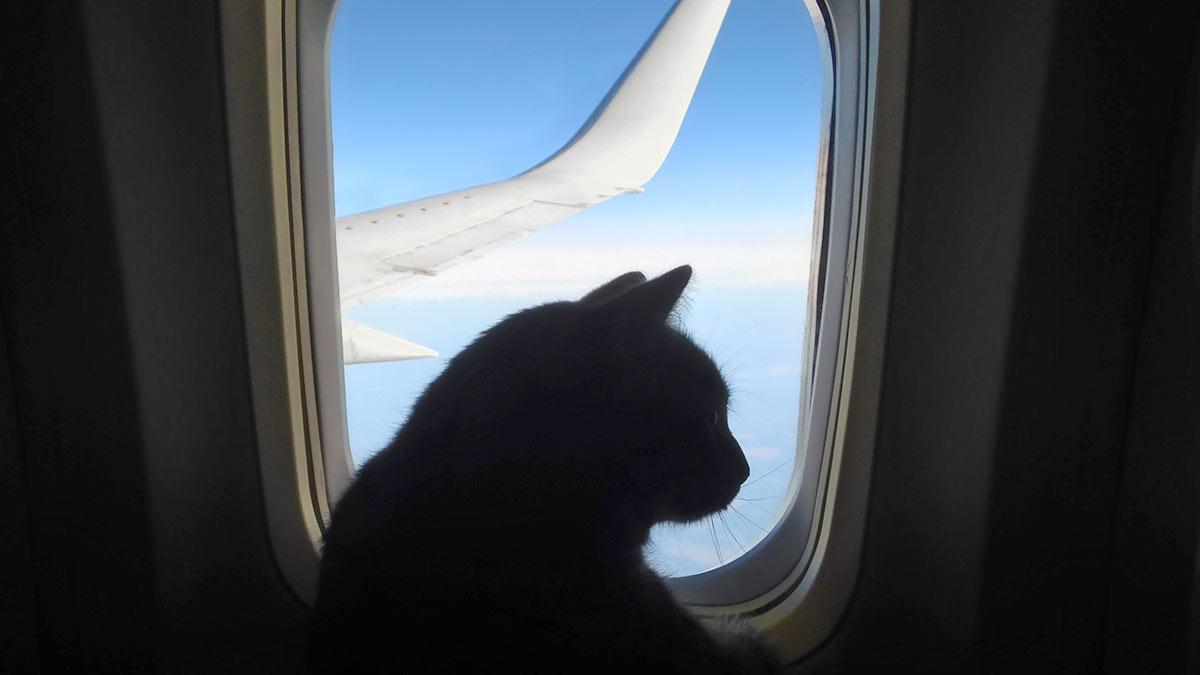 кот в самолете иллюминатор