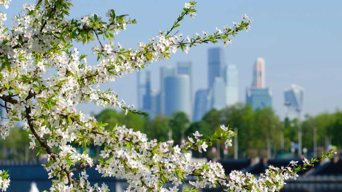 moscow spring Москва весна