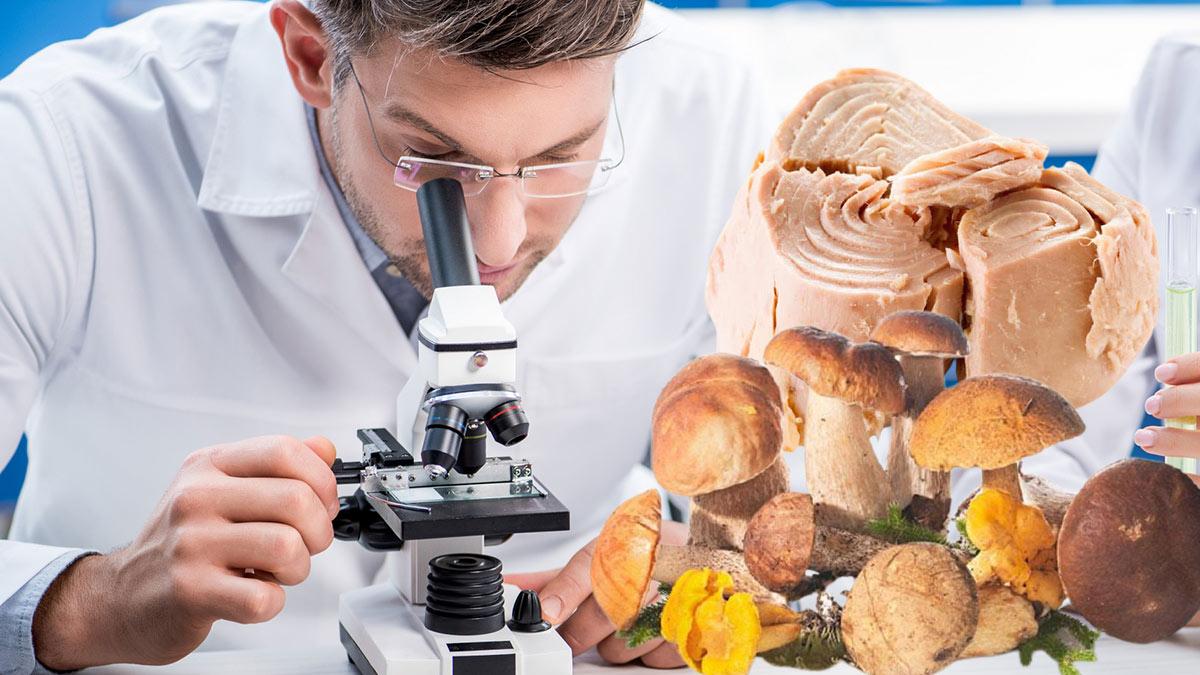 опасная еда исследование микроскоп врач тунец грибы