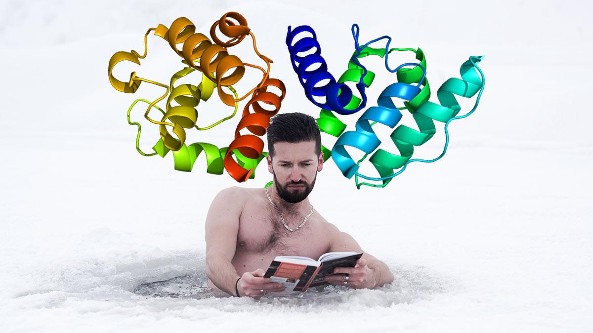 Человек читает книгу в проруби альфа белок