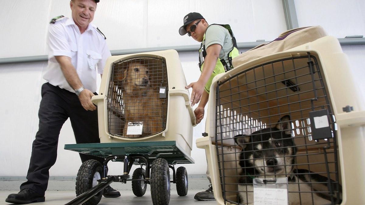собаки в контейнере для перевозки