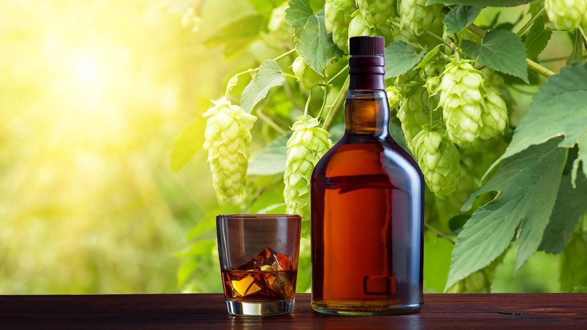 солод виски погода алкоголь солнце