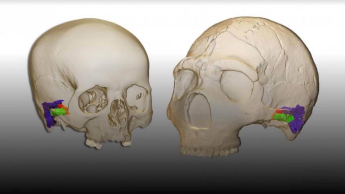 неандертальцы могли воспринимать и воспроизводить человеческую речь
