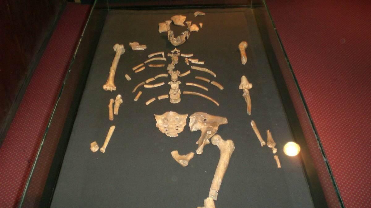 Скелет Люси
